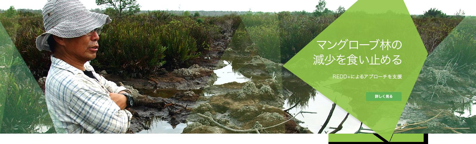マングローブ林の減少を食い止める
